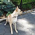 un autre chien de newyork