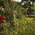 Windows-Live-Writer/jardin_D005/DSCF3863_thumb