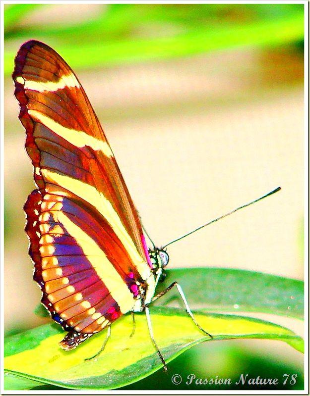Les papillons (23)