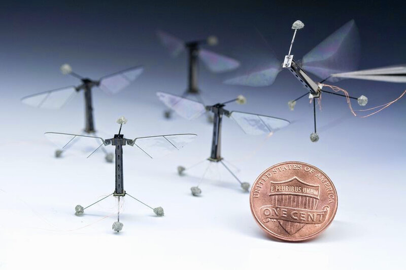 fly-sized-insect-robot_66954_990x742