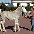 Concours de poulains marquise 2011