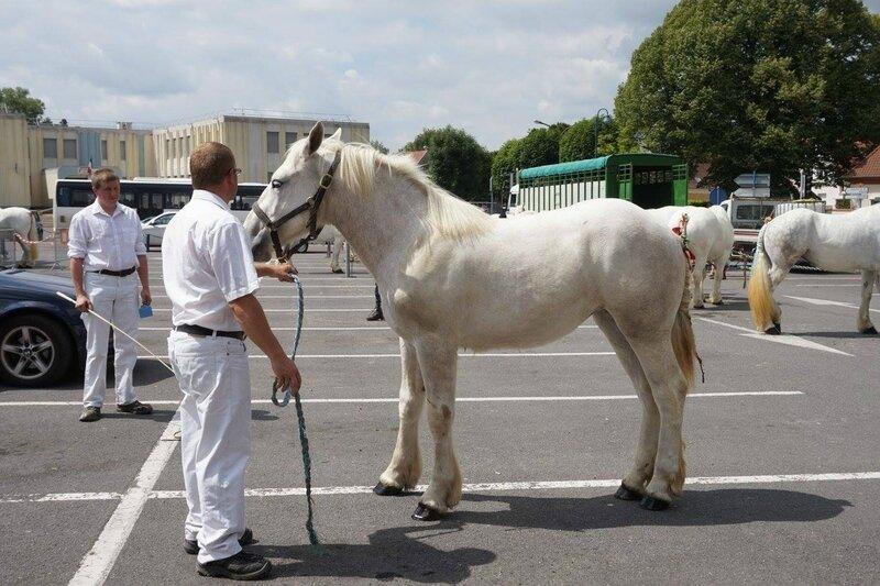 Gentille de Tachincou - 17 Juin 2017 - Concours élevage local - St Pol sur Ternoise (62) - 1ere (1 an)