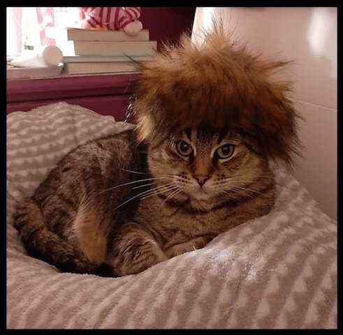 chat coiffure