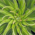 plante_verte_feuilles_spirales