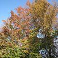Scénette d'automne