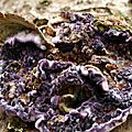 Trichaptum abietinum (8)