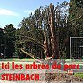 Sauvons le parc georges steinbach de #mulhouse rencontre dimanche 9 juin à 14h00