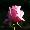 Le soleil joue avec les fleurs
