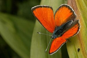 Papillon-orange-391COL06-041N-1