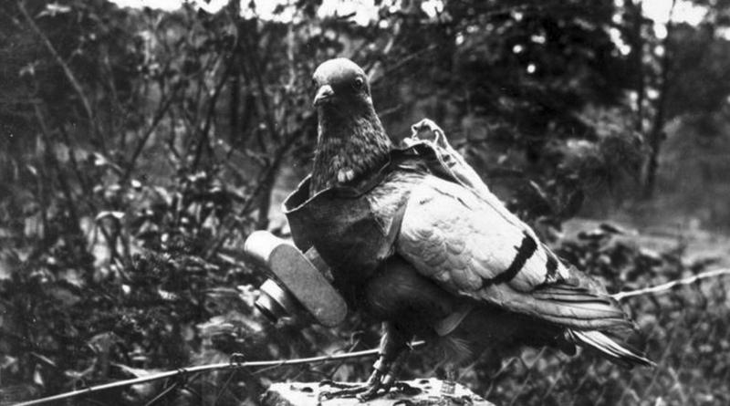 pigeon espion allemand première guerre mondiale