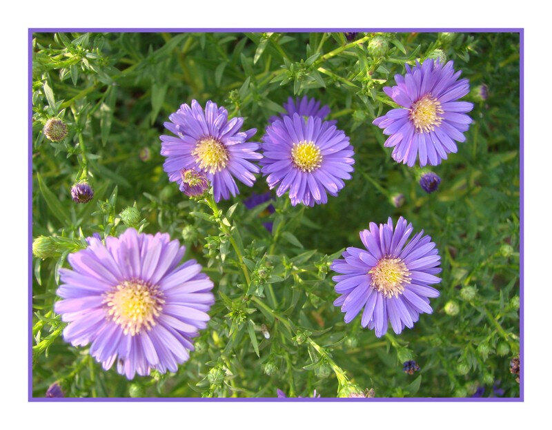 aster 5