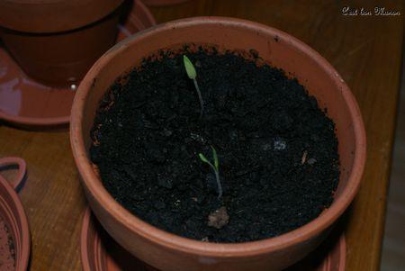 tomates_04