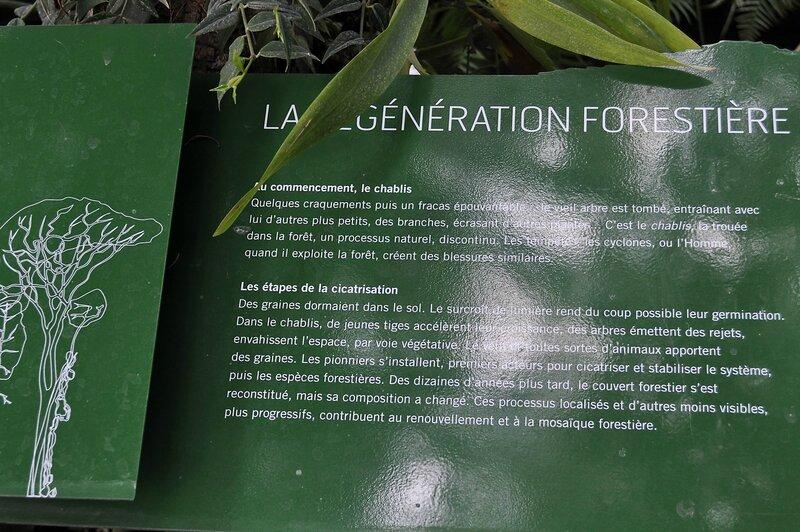 Panneau pédagogique La Génération forestière