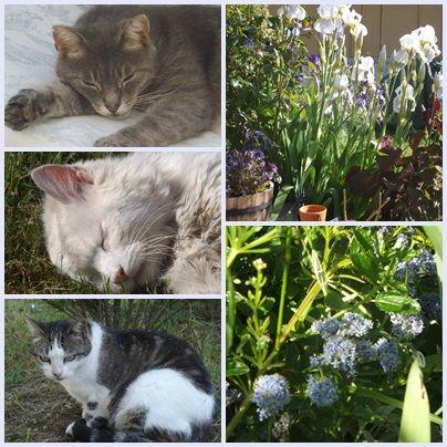 Cats & garden (15)