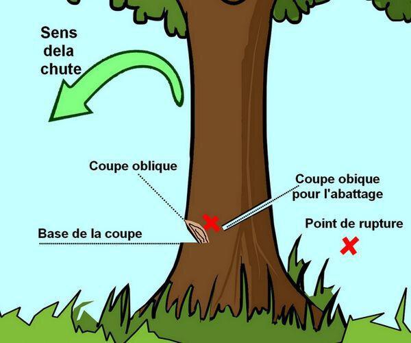 comment abattre un arbre en image