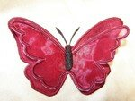 papillon_premier4