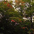 C'est l'automne, vive mon non-départ !