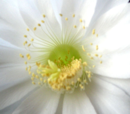 fleur_de_cactusGP