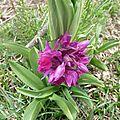 P1060105 une orchidée