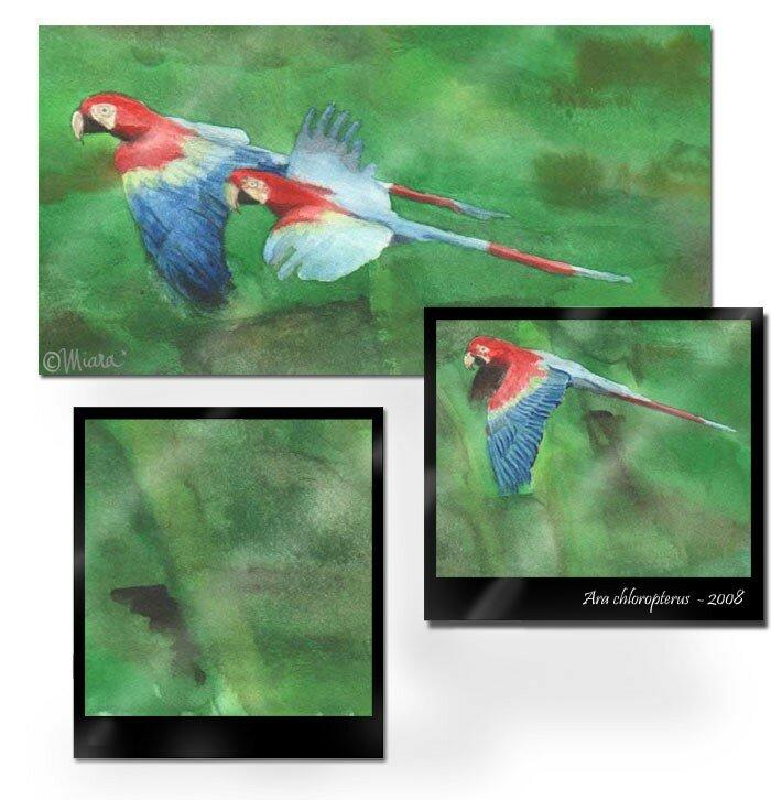 perroquets4
