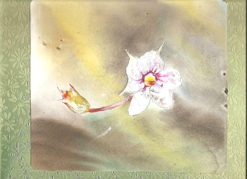 carnet fleurs 003