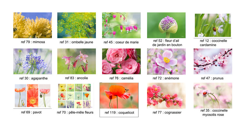 cartes-fleurs1P