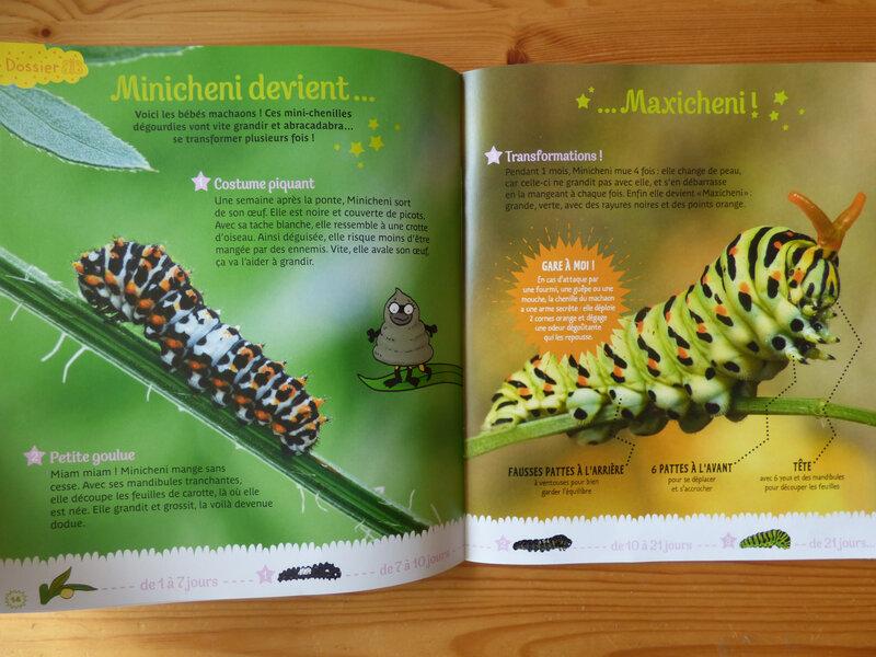 Petite Salamandre avril-mai 18 (2)