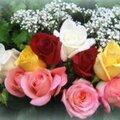 Les roses du coeur (triolet écrit sans la lettre a)