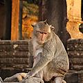 Résident d'Angkor Wat