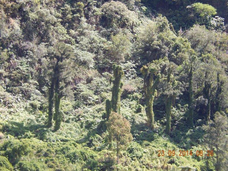 voyage à la Réunion, journée du 23 septembre 006