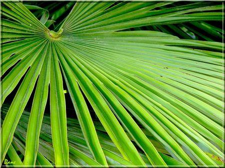 1_palme