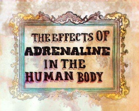 eduardo_recife_effects_of_adrenaline