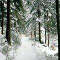 Glaswaldsee - Moorweg