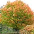 Aux tons d'automne...