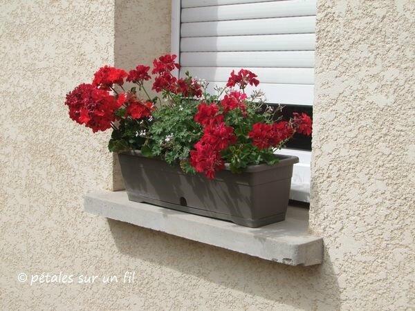 jardinière3_9 JUIL17
