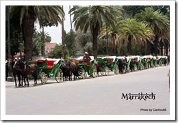 CALECHES OU TAXIS MAROCAINS (2)
