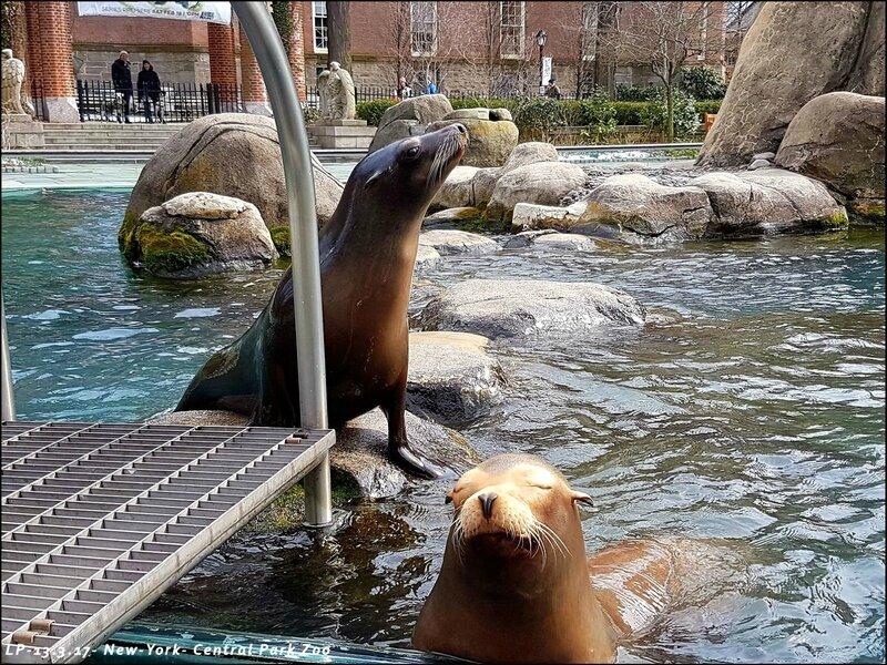 18-NY-Central Park Zoo-13