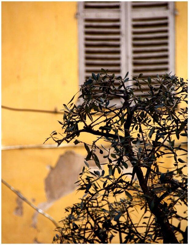 olivier-volet
