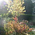 Journee d' automne .....