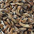 Croquettes de crevettes grises
