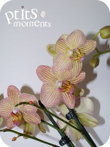 201104_007_image_du_jour___orchid_e_tigr_e