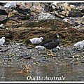 52 IMG_3508 oies mer Australe 125pps