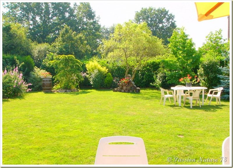 Petite promenade dans notre jardin (2)