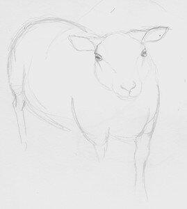 Croquis_mouton