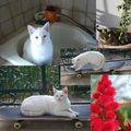 Vie de chats