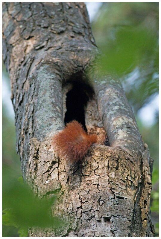 ville JP ecureuil arbre queue 050715 4