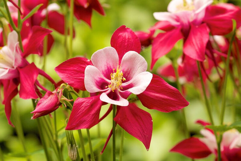 les-plus-belles-fleurs-de-printemps_n