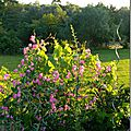 Windows-Live-Writer/Jardin_10232/DSCN0743_thumb