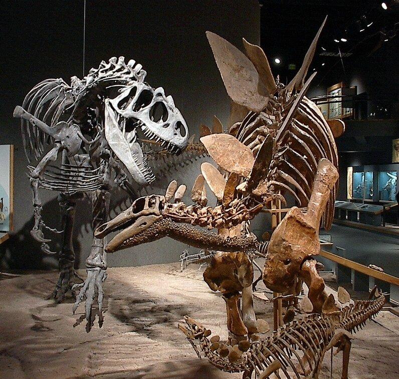 DMSN_dinosaurs