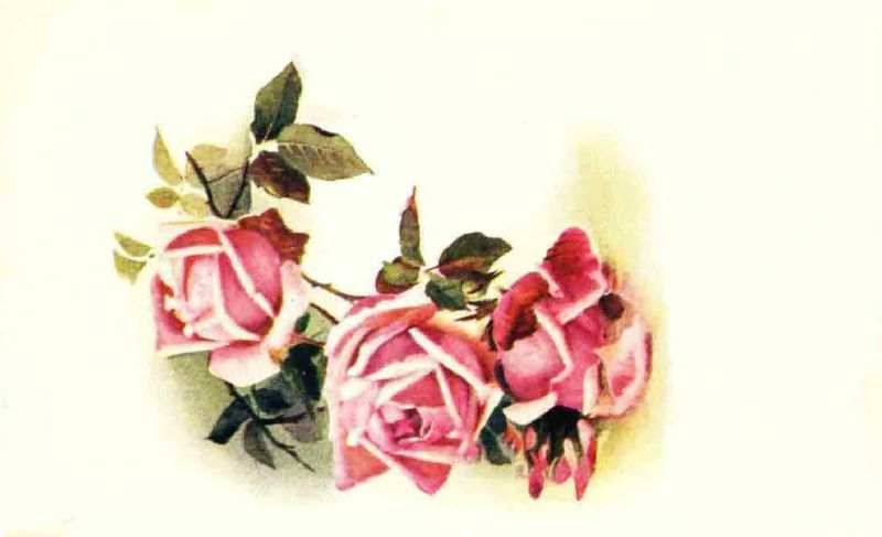 More_vintage_roses____by_jinifur